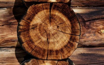 The Best Wood for Wood Burning Fire Heaters